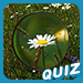 Magnified Object Quiz