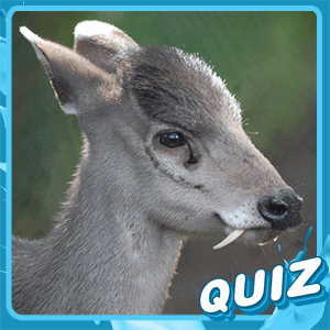 Obscure Animal Quiz
