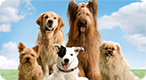 What Breed of Dog Are You?: Woof, woof woof woof, woof bark?