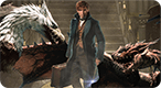 Which Fantastic Beast from Harry Potter Are You?: Please send all queries to Newt Scamander.