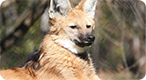 Wild Dog Photo Quiz: Do you know your dogs?