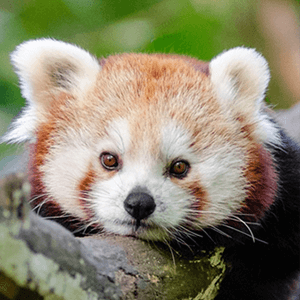 Even More Obscure Animals Quiz