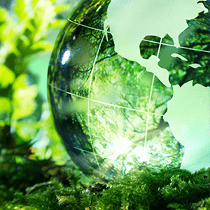 Environmental Impact Quiz