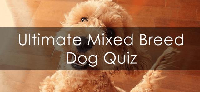 Ultimate Mixed Breed Dog Quiz