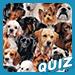 Races de chien: testez vos connaissances
