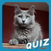 Obscure Cat Breeds Photo Quiz